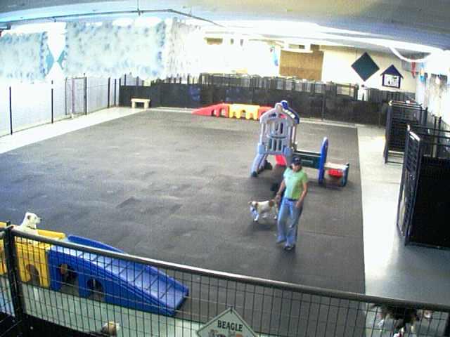 Lucky Dog Resort - Inside Play Area - Camera 1 photo 4
