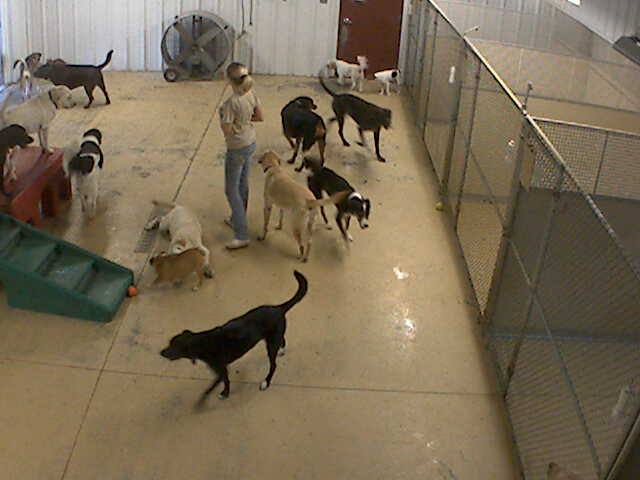 Pet Lodge of Clifton Park - Doggie Daycare 3 photo 3