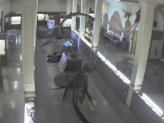 Museum of Geology - Dino Cam photo 6