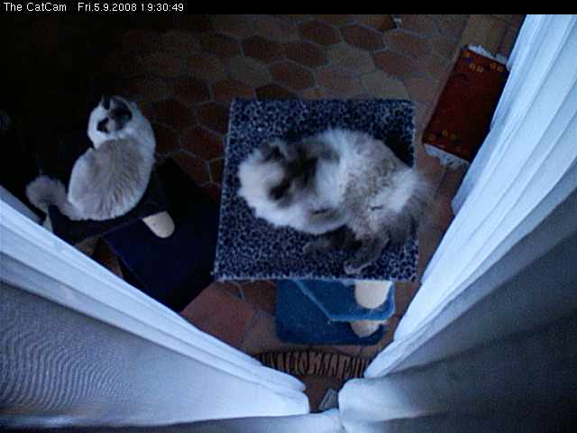 The CatCam photo 6