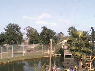 Alabama Gulf Coast Area - Zoo Cam photo 3