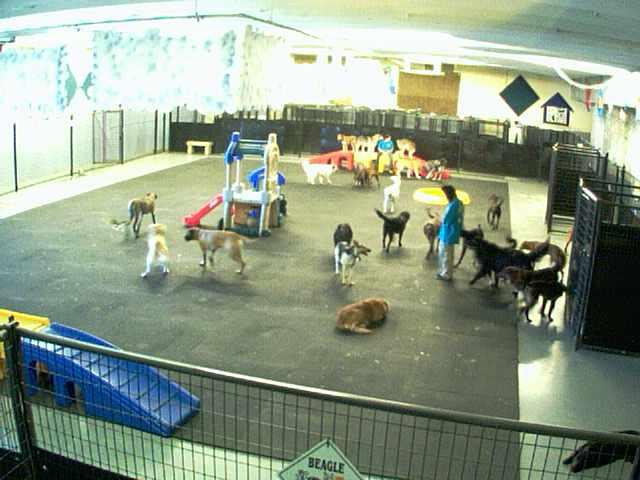 Lucky Dog Resort - Inside Play Area - Camera 1 photo 5