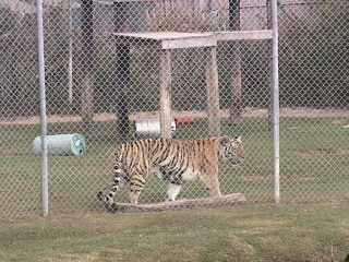 Alabama Gulf Coast Area - Zoo Cam photo 6
