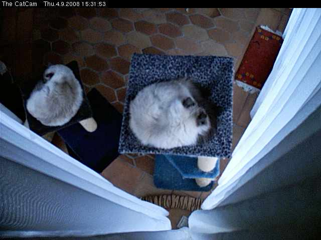 The CatCam photo 1