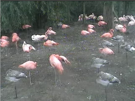 Flamingo photo 4