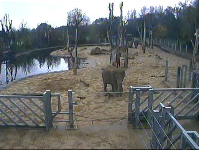 Elephant Enclosure photo 2