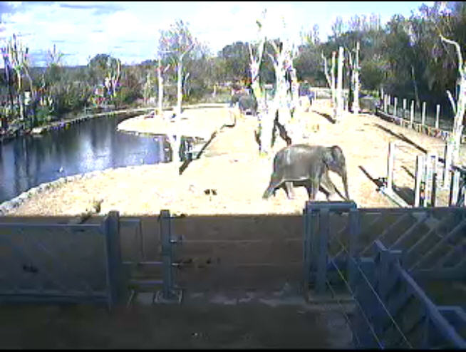 Elephant Enclosure photo 4