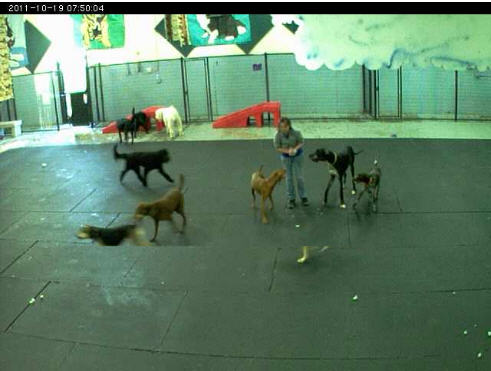 My Golden Dogs cam photo 2