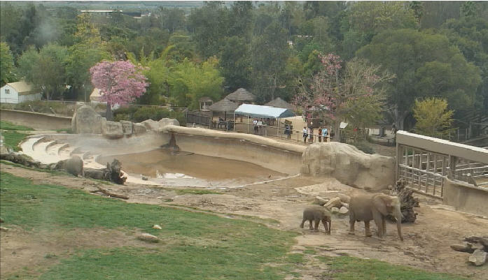 African elephants photo 6