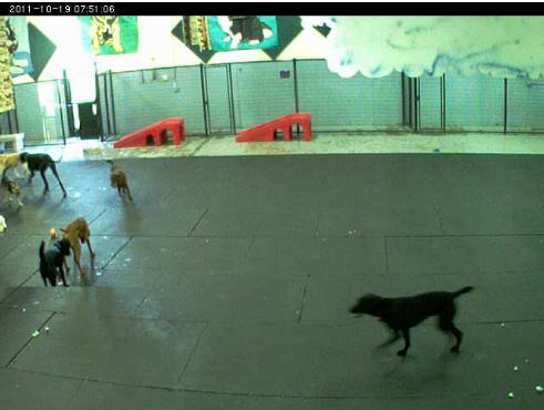 My Golden Dogs cam photo 3