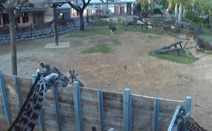 Giraffe Platform photo 2
