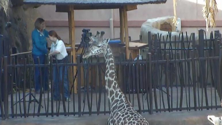 Giraffe Platform photo 5