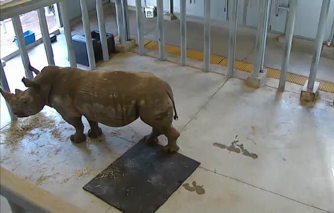 Houston Zoo Rhino Yard  photo 1