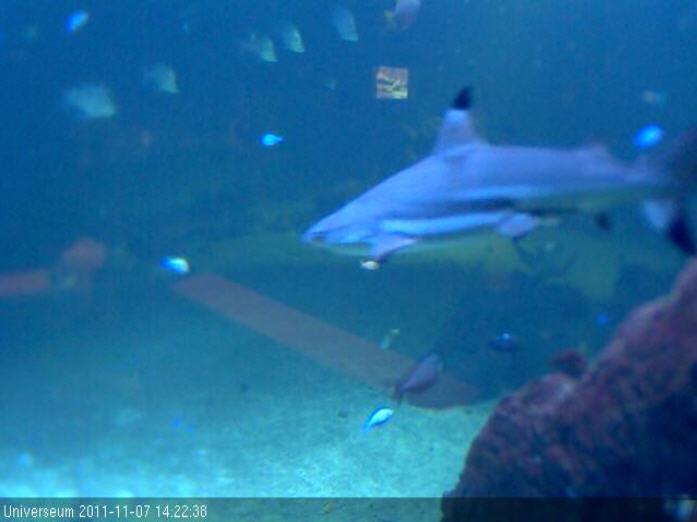 Underwater Shark Tank photo 2