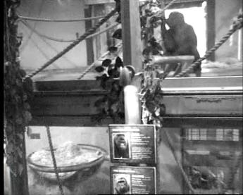 Gorilla Inside photo 1