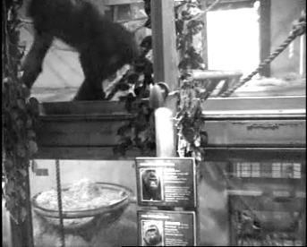 Gorilla Inside photo 3