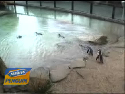 Penguin Zoo photo 1