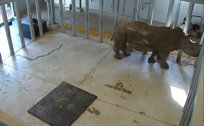 Houston Zoo Rhino Yard  photo 2