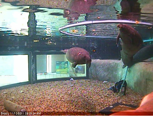 Parker Manatee Aquarium WebCam photo 2
