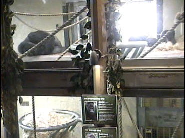 Gorilla Inside photo 4