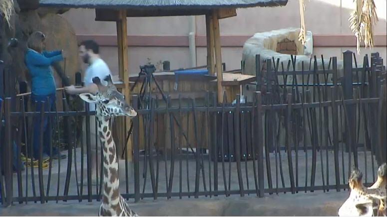 Giraffe Platform photo 4