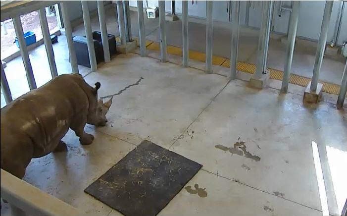 Houston Zoo Rhino Yard  photo 3