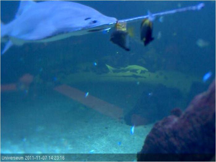 Underwater Shark Tank photo 3