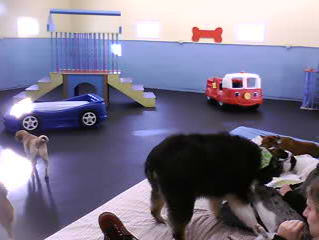 Doggie Daycare photo 3