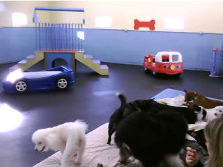 Doggie Daycare photo 2