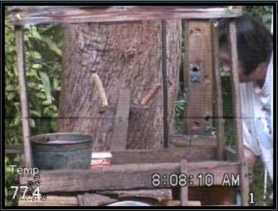 Live Squirrel and bird cam photo 1