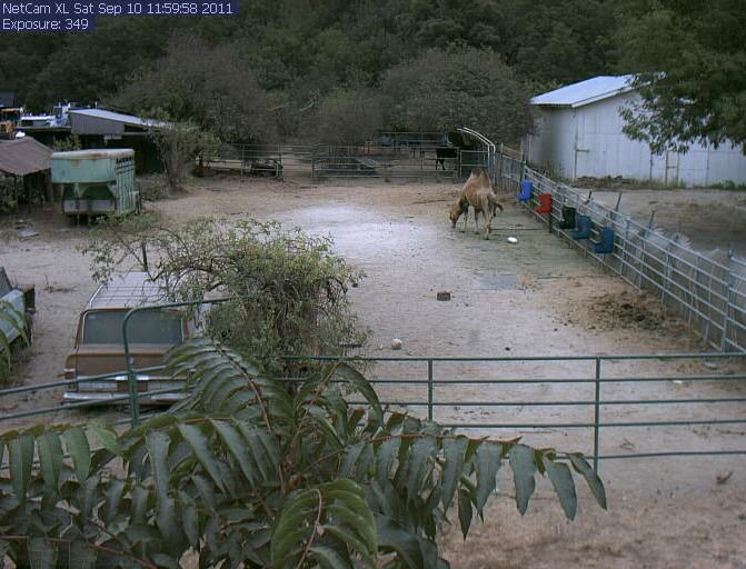 Live of a camel, cebra and llama photo 3