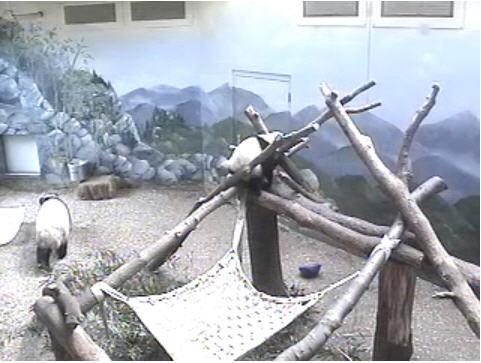 Panda Bear photo 3