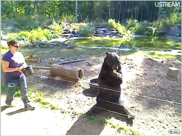 Bear Center of North American photo 2