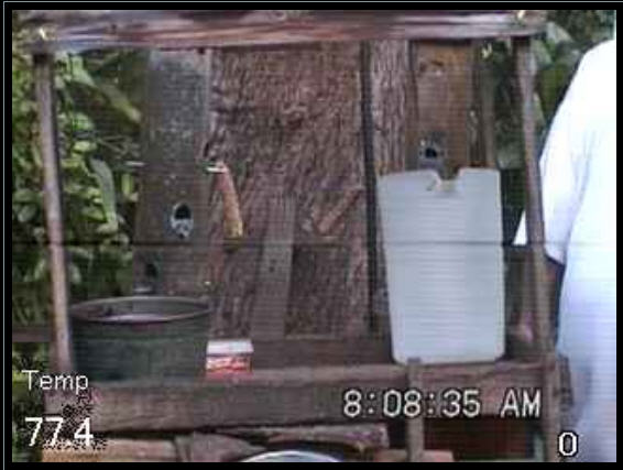Live Squirrel and bird cam photo 2