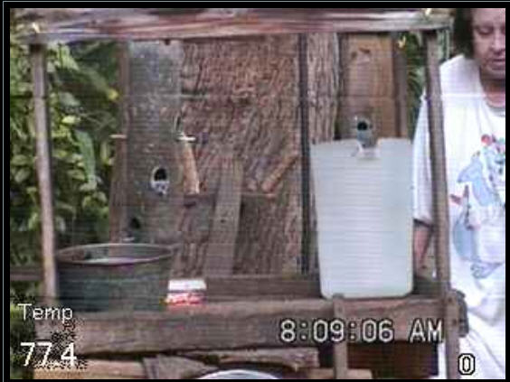 Live Squirrel and bird cam photo 3
