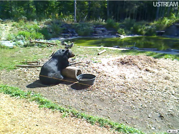 Bear Center of North American photo 3
