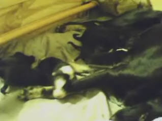 Vesla with puppies photo 1