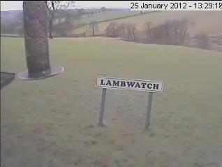 Lamb Watch photo 1