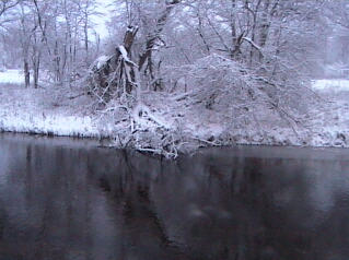 The Pine River photo 2