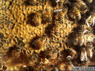 Draper's Super Bee Apiaries photo 3