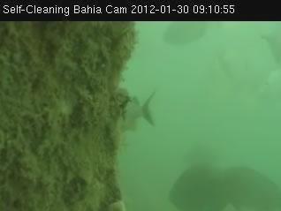 Self - Cleaning bahia cam photo 1