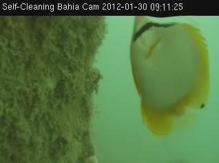 Self - Cleaning bahia cam photo 2
