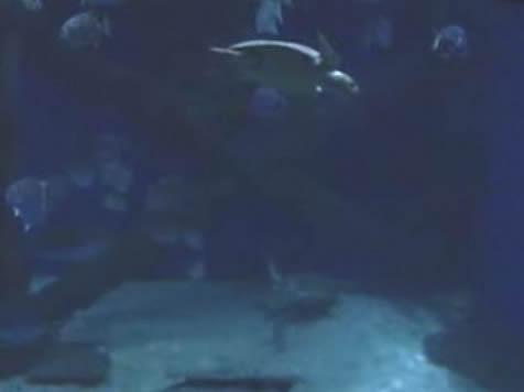 Sea Turtles photo 2