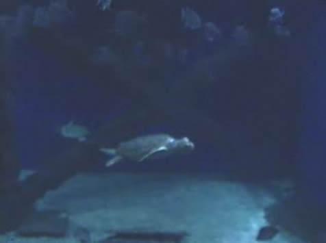 Sea Turtles photo 1