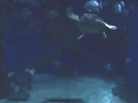 Sea Turtles photo 3
