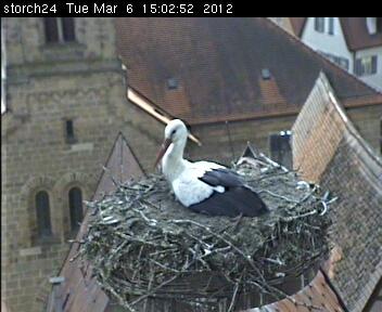 Stork's Nest photo 2
