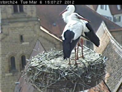 Stork's Nest photo 1