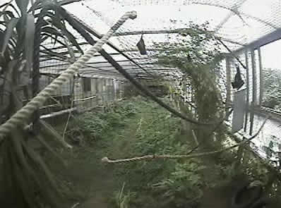 Livingstone's fruit Bats photo 1