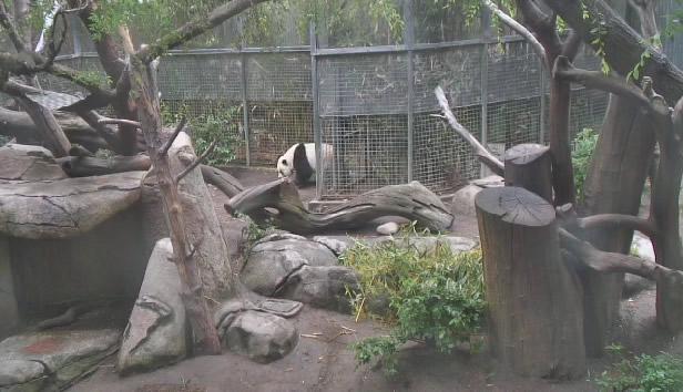 Panda Bear photo 2