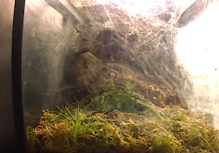Tarantula photo 1